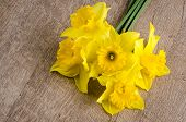 pic of jonquils  - Closeup of yellow jonquil flowers on wooden background - JPG