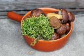 picture of bolete  - Fresh forest 	boletes and moss in terracotta pan - JPG