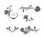 pic of white roses  - Rose flowers with vintage elements vector  isolated on a white background - JPG