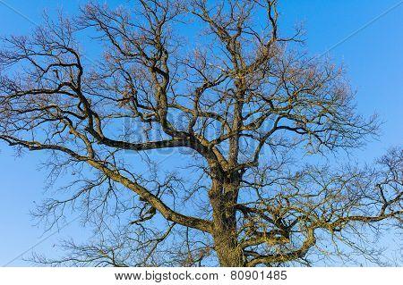 bare tree crown, symbol photo for seasons change, ecology