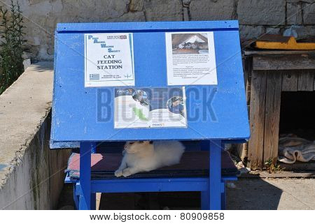 PAXOS, GREECE - JUNE 14, 2014: A cat feeding station for feral cats at Loggos on the Greek island of Paxos. The station is run by PAWS (Paxos Animal Welfare Society) who were formed in 2005.