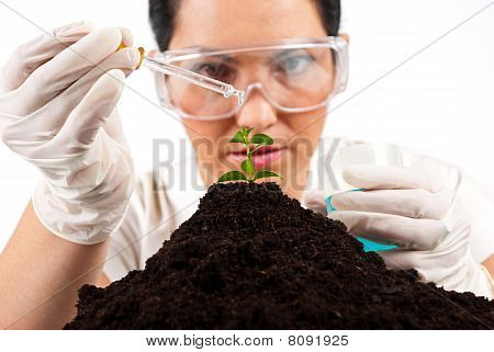 Scientist Woman  Working