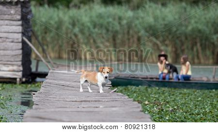 Dog On Wooden Dock