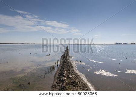 dividing line and horizon in flooded rice field