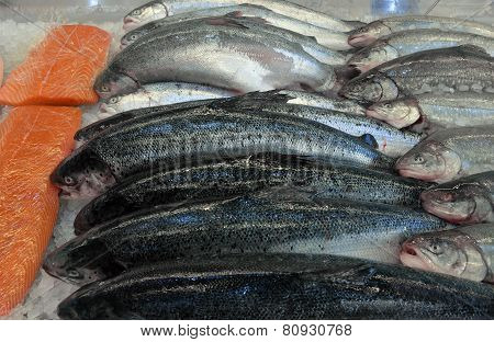 Salmon In A Fish Shop