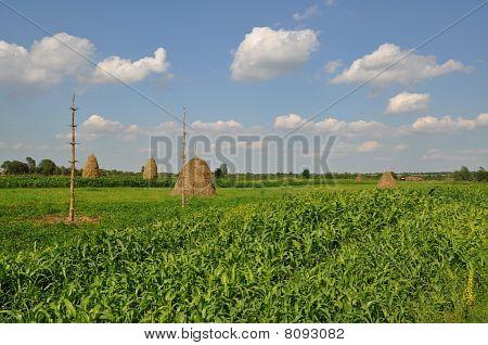 Rural village fence.