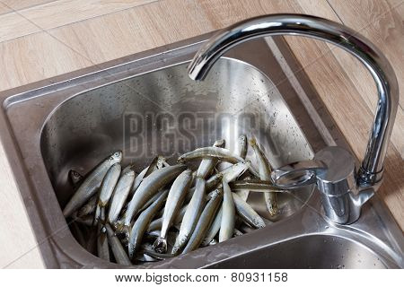 Fresh Fish In A Sink
