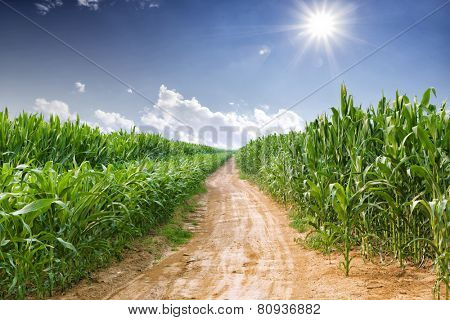 skyline and corn field