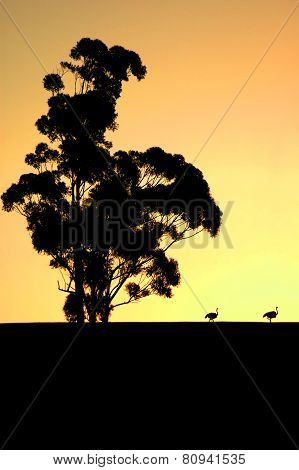 Eucalyptus & Ostrich Silhouettes