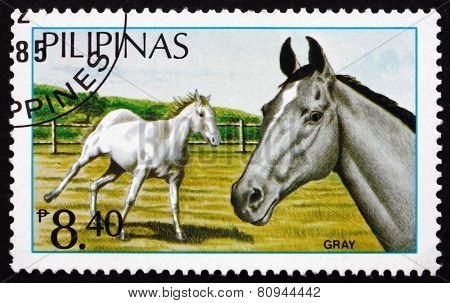 Postage Stamp Philippines 1984 Gray, Philippine Horses