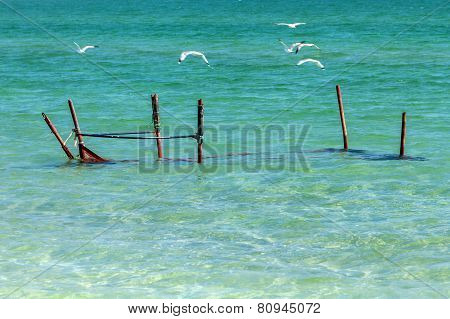 Seagulls on the shore of the Sea of Azov in Crimea