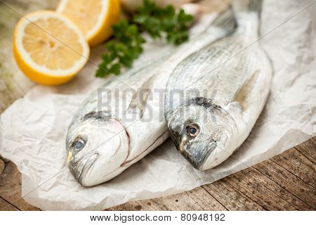 Gilt-head Sea Bream Fish