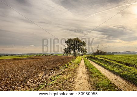 Hdr Shoot Of An Old Tree With Fields And Road