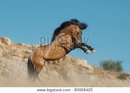 Horse Rears Up In Mountains