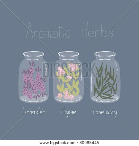 aromatic herbs, lavender, thyme and rosemary