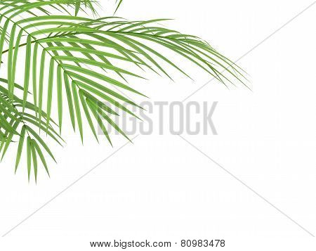 Tropical Plant Branchs