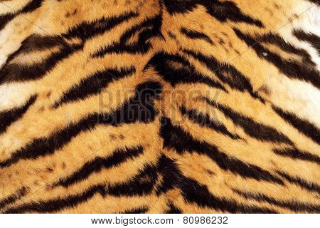Tiger Beautiful Texture Of Real Fur