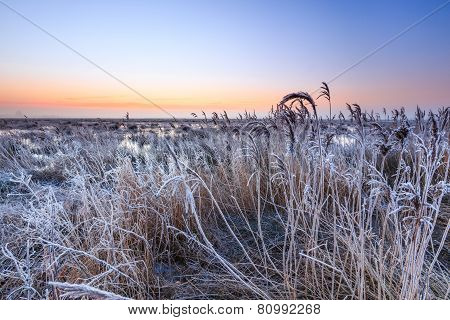 Hoar Frost On Reed In A Winter Morning Landscape