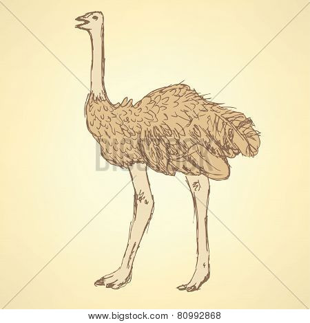 Sketch Cute Ostrich In Vintage Style