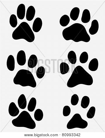 paw of cats,