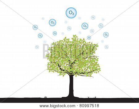 Tree With Oxygen