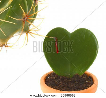 Heart Shaped Cactus While Is Stung By Another Plant.