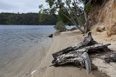 picture of inlet  - Trunk and trees at the Mallacoota Inlet - JPG