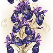 stock photo of purple iris  - Background with blue and purple irises for design - JPG