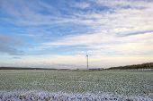 image of geese flying  - Flock of geese flying over a snowy field in winter - JPG