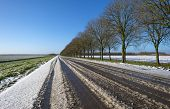 picture of row trees  - Row of trees along a snowy road in winter - JPG
