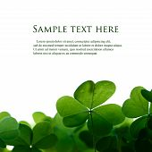 image of clover  - Green clover leafs border with space for text - JPG