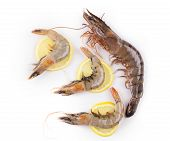 stock photo of white-tiger  - Raw tiger shrimps on white - JPG