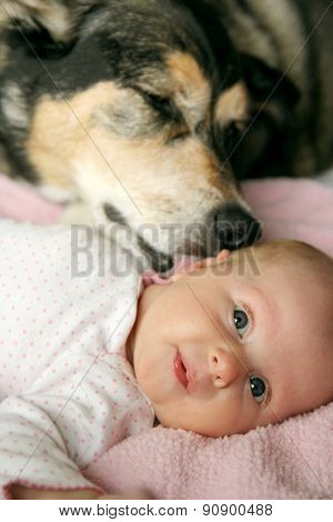 Pet Dog Kissing Newborn Baby Girl