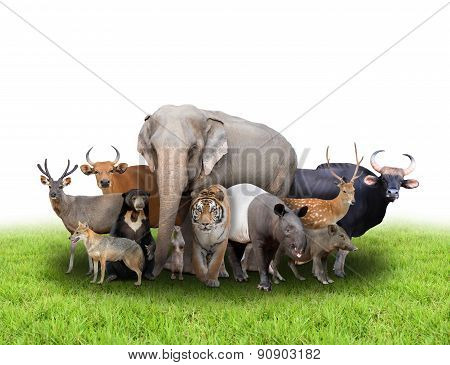 Group Of Asia Animals