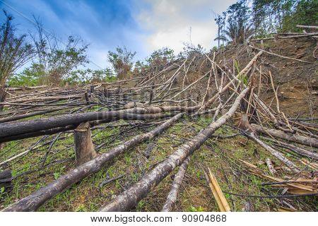 Deforestation environmental problem as rain forest jungle destroyed for human development