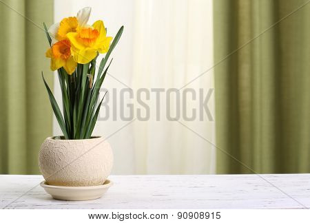 Beautiful daffodils in pot on fabric background