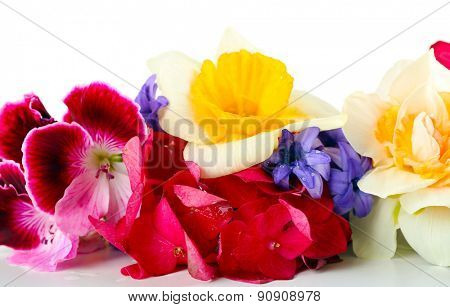 Beautiful bouquet of bright flowers close up