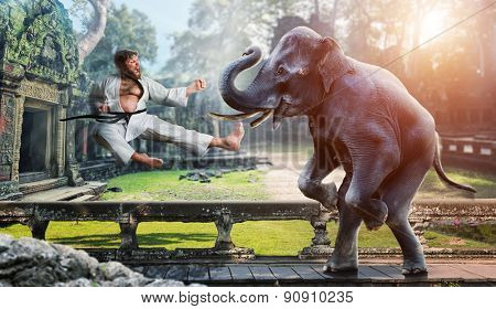 Karateka fights with elephant