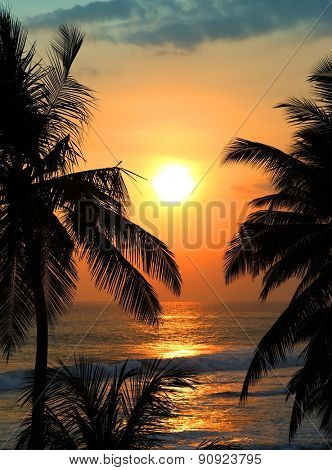 beautiful landscape with tropical sea sunset and palm trees on foreground