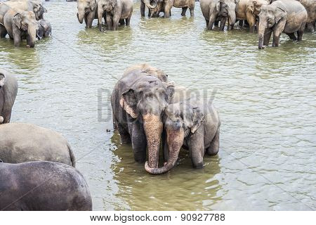 Hugging Elephants In The River