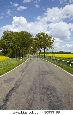 Road With Trees And A Blossoming, Yellow Colza Field