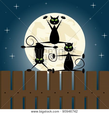 Black cats on a fence
