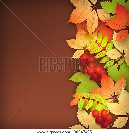 Autumn Vector Fall Leaves