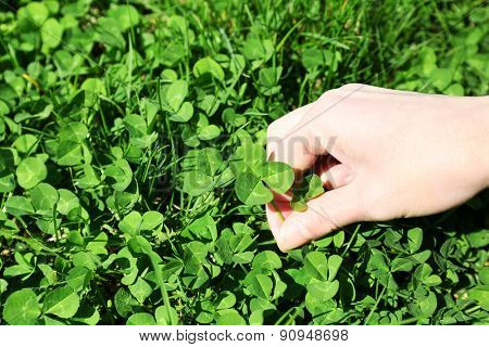 Woman hand picking clover, outdoors