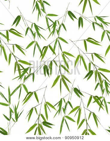 seamless background from isolated green bamboo branches