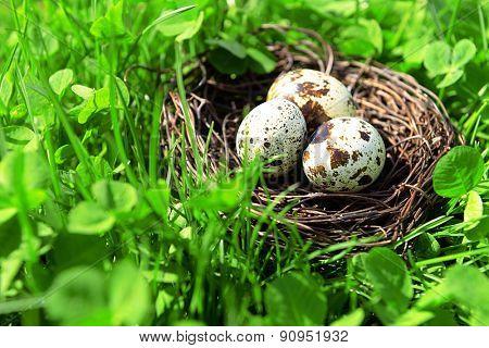Nest with bird eggs over green bush background