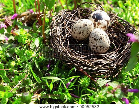 Nest with bird eggs over flowers background