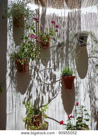 Flowerpots On Shadowy Wall