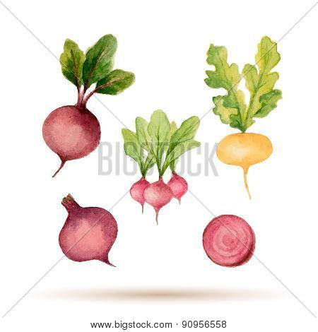 Set Of Watercolor Vegetables.