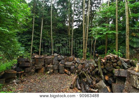 Wood logs on forest ground